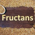 fructans and health